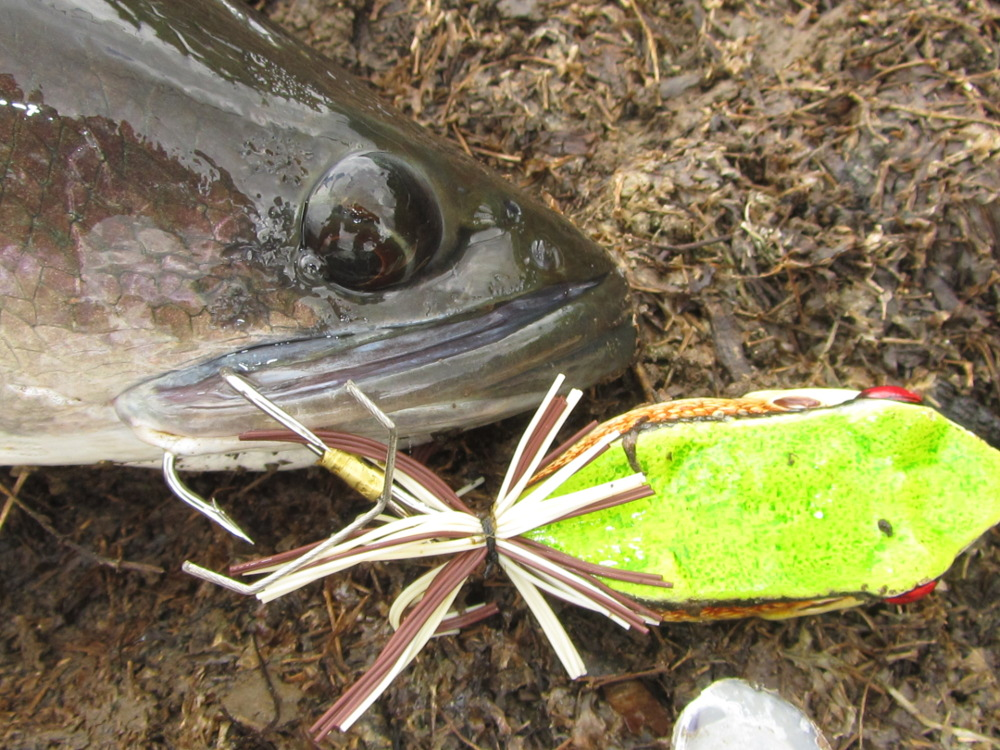 killer_frog_xl_snakehead_fishing_lure