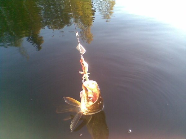 lure_fishing_pike_sweden