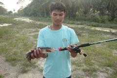snakehead_bor1