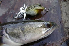 toad_replica_topwater_fishing_lure