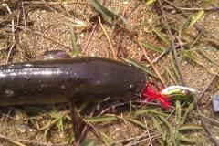 baitcasting_killer_frog_buzzbait_lures_for_snakehead