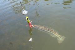 beast_frog_killer_lure