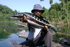 big_momma_snakehead