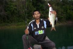 hampala_barb_jungle_perch
