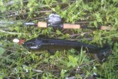 killer_frog_buzzbait_snakehead_lure